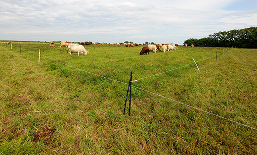 Prescribed grazing, also called rotational grazing, is one of 20 conservation practices in which NRCS will offer higher payment rates to Iowa farmers.