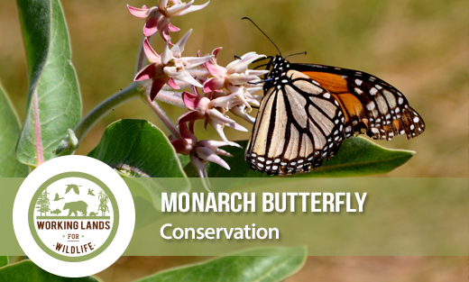 WLWF Monarch Homepage feature