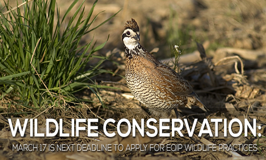 USDA is seeking applications in Iowa for wildlife conservation practices.