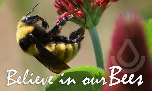 Believe in our Bees