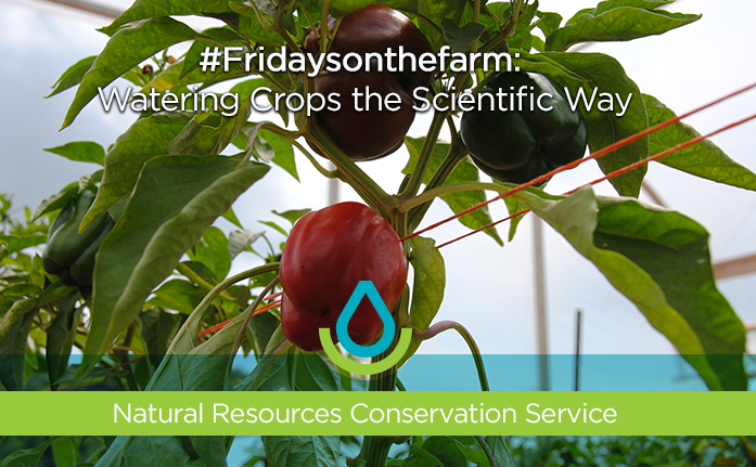 Fridaysonthefarm: Watering Crops the Scientific Way Web Header