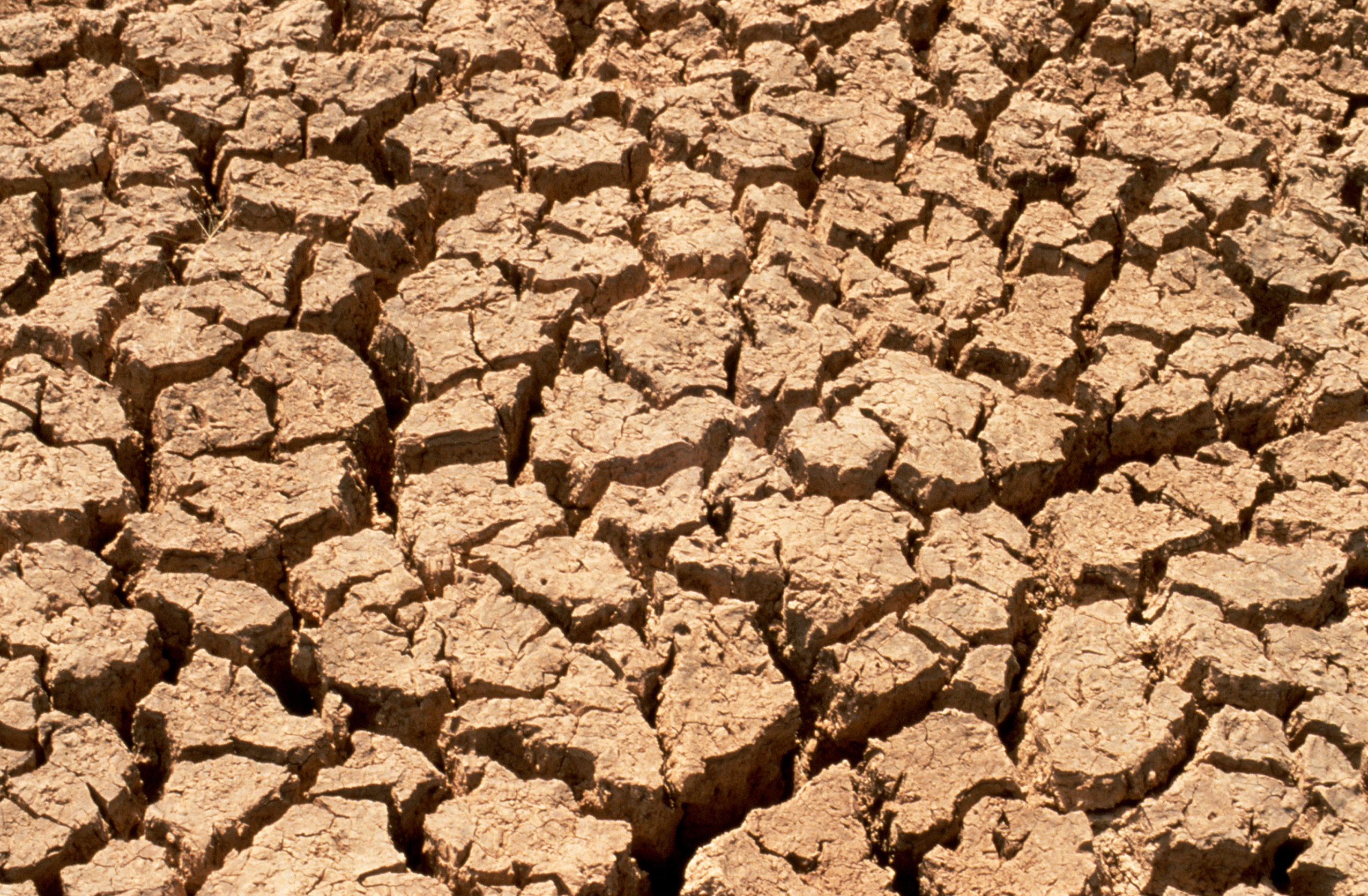 Drought on Soil