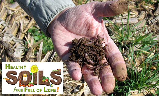 Healthy Soils are Full of Life