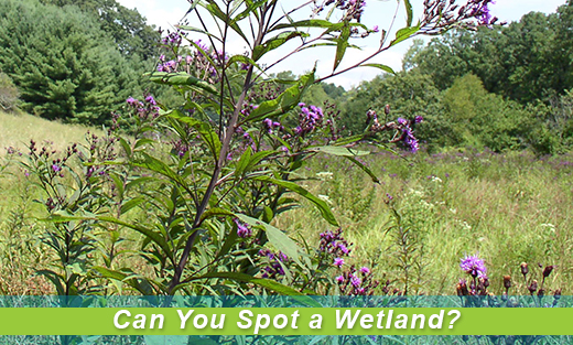 Field Scene: Can You Spot a Wetland?