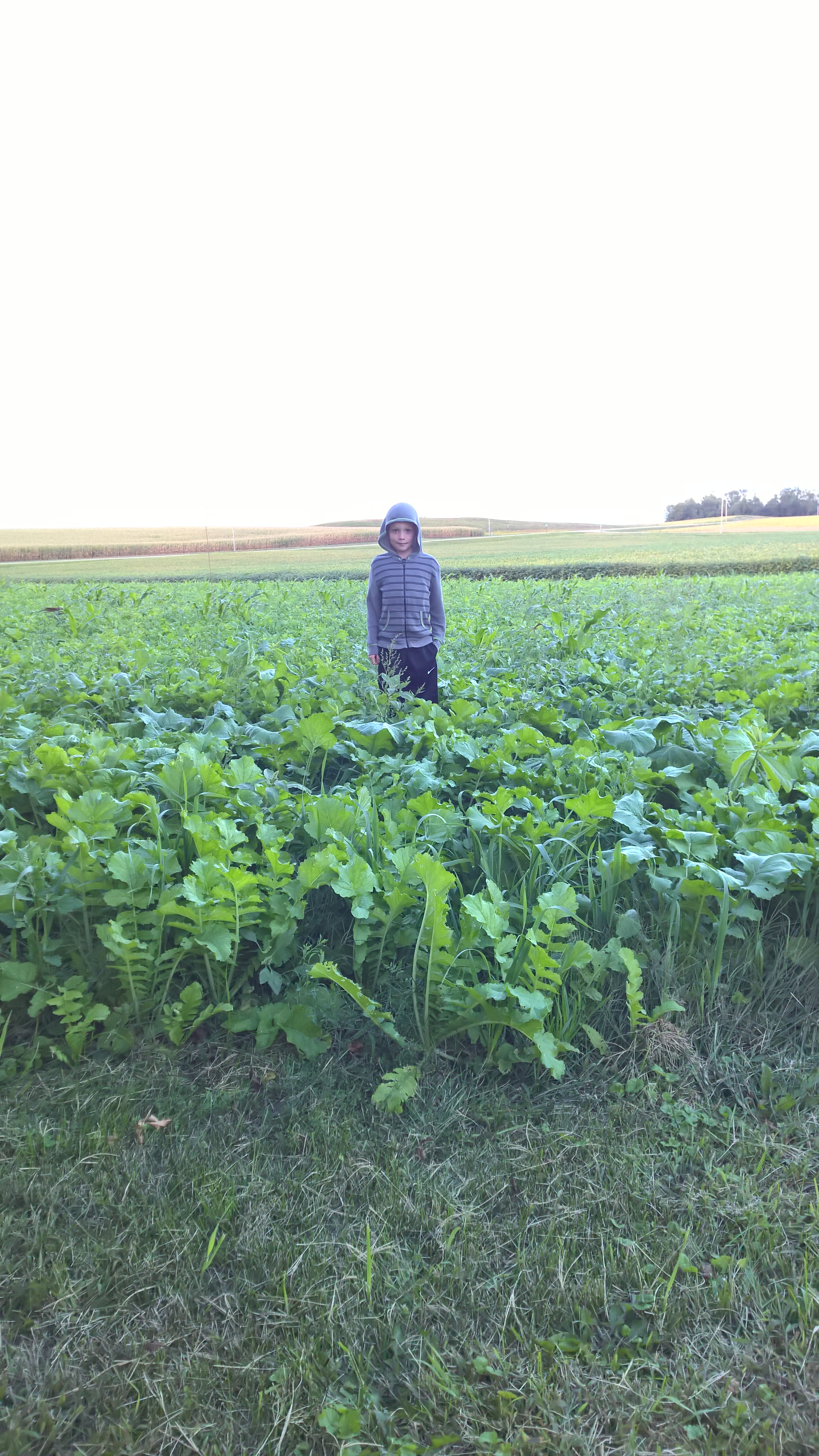 Curt's 9-year old grandson, Andrew, standing in cover crops. Curt's commitment to conservation ensures the land will be productive for future generations.