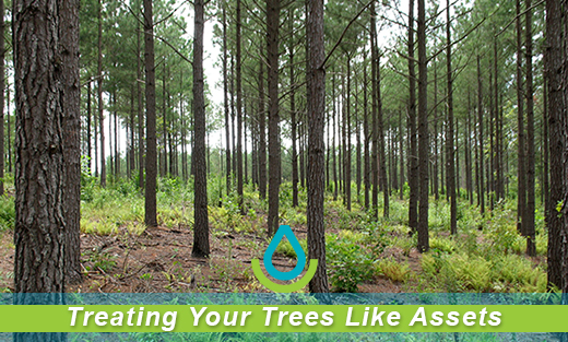 Treat Your Trees Like an Asset