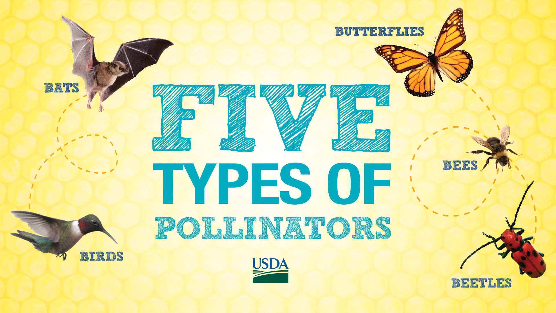 Five Types of Pollinators - Birds, Bats, Butterflies, Bees, Beetles