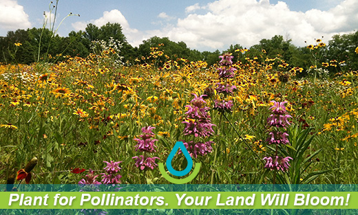 Plant for Pollinators. Your Land Will Bloom!