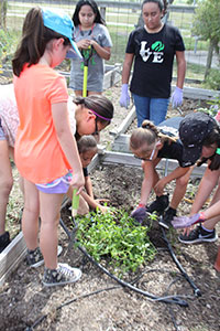 Girl Scouts from Greater South Texas add native plants for Monarchs to Combes Community Garden.