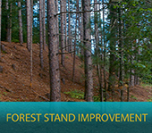 Forest stand Improvement