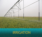 Web Irrigation