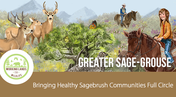 Sage Grouse Story Map Web Header 2