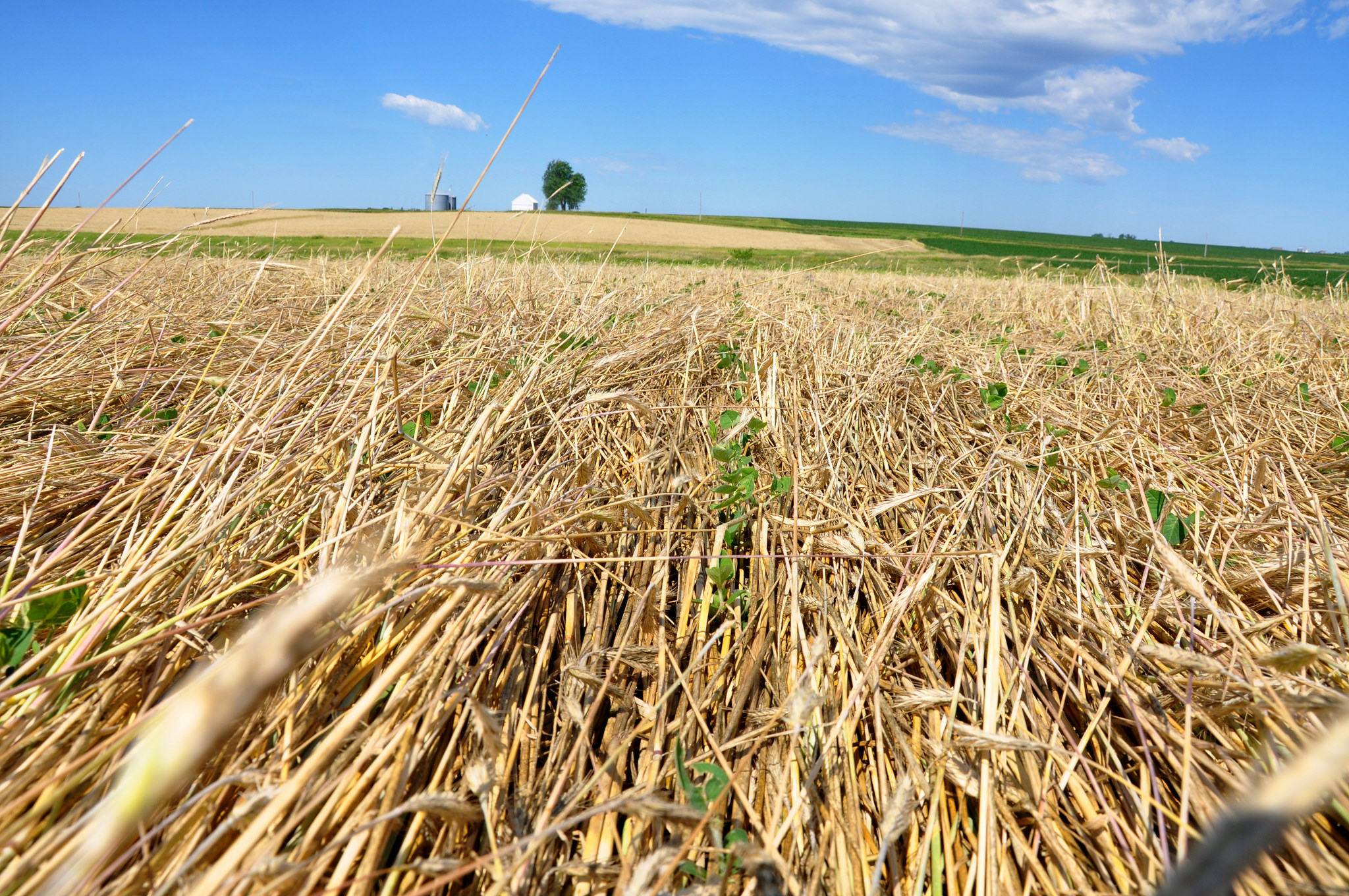 #Fridaysonthefarm: Iowa Farmer Uses Roller Crimper in Organic No-Till Photo 4