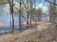 Prescribed burning is applying fire to forestland within a recommended set of conditions.