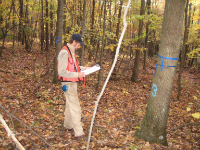 Upland wildlife habitat management is the monitoring of the understory of a forest stand for seeding germination and development.