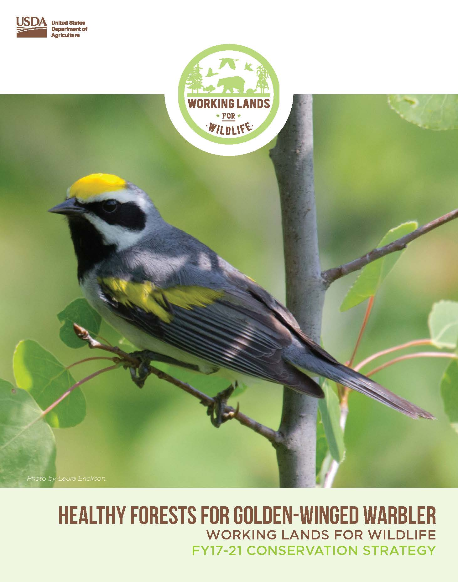 This five-year conservation strategy targets sustainable forestry efforts to help the at-risk migratory songbird. The strategy focuses on forestry practices that result in young forests, which the golden-winged warbler needs for nesting habitat.
