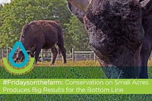 #Fridaysonthefarm: Conservation on Small Acres Produces Big Results Thumb
