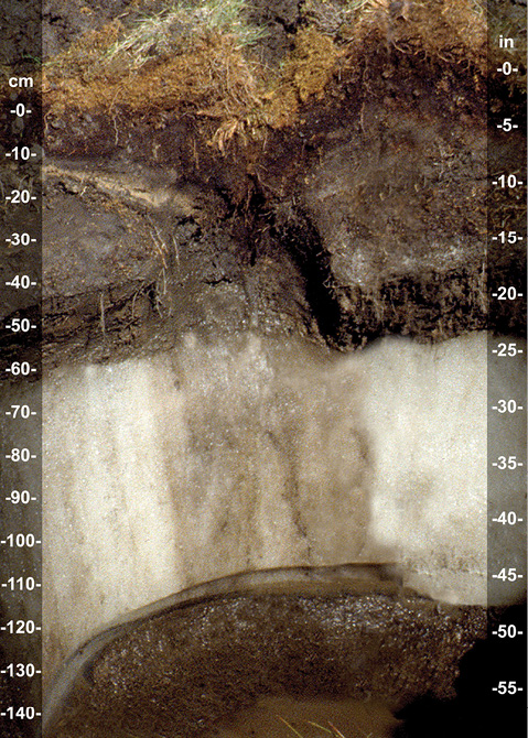 "Figure 3-3. A soil (a Glacistel in Alaska) with a permanently frozen ice layer (designated ""Wf"") between depths of 60 and 130 cm. (Photo courtesy of John Kelley)"