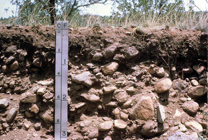 Figure 3-8. A soil in which the layers below a depth of about 20 cm are very cobbly loamy sand. Left side of scale is in 20-cm increments.