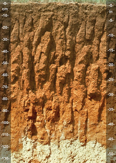 Figure 3-17. Prismatic soil structure. (Photo courtesy of John Kelley)