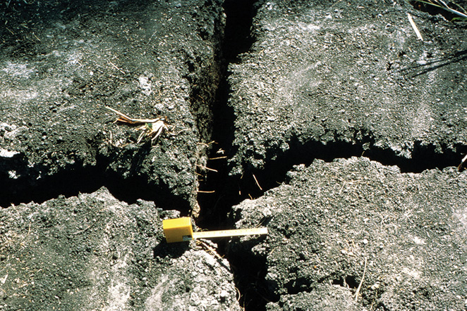 Figure 3-19. Large reversible trans-horizon cracks extend from the soil surface deep into the subsoil of this clayey soil, which is classified as a Vertisol.