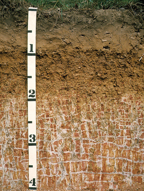 Figure 3-24. A soil in which a reticulately mottled zone with plinthite (darkest red colors) is below a depth of about 2 feet.