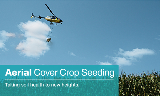 Aerial Cover Crop Seeding: Taking soil health to new heights. Image of cover crop seeds being dropped from a helicopter over a field of silage corn.