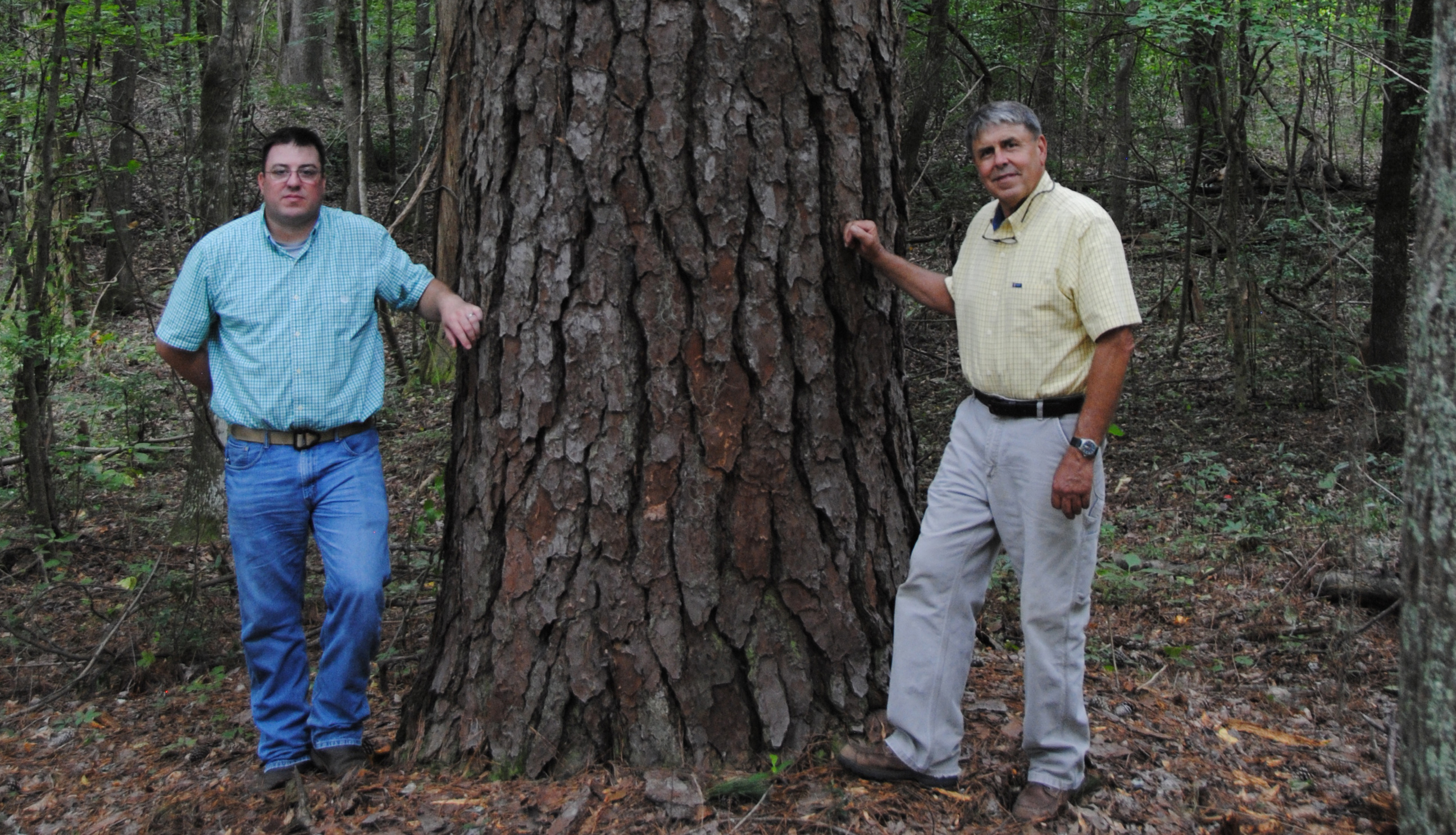 "I don't know how old that pine tree is and there isn't an increment bore big enough to safely determine it,"" said Johnny Bembry (right). ""We'll just have to wait to figure that out one day when it dies."""