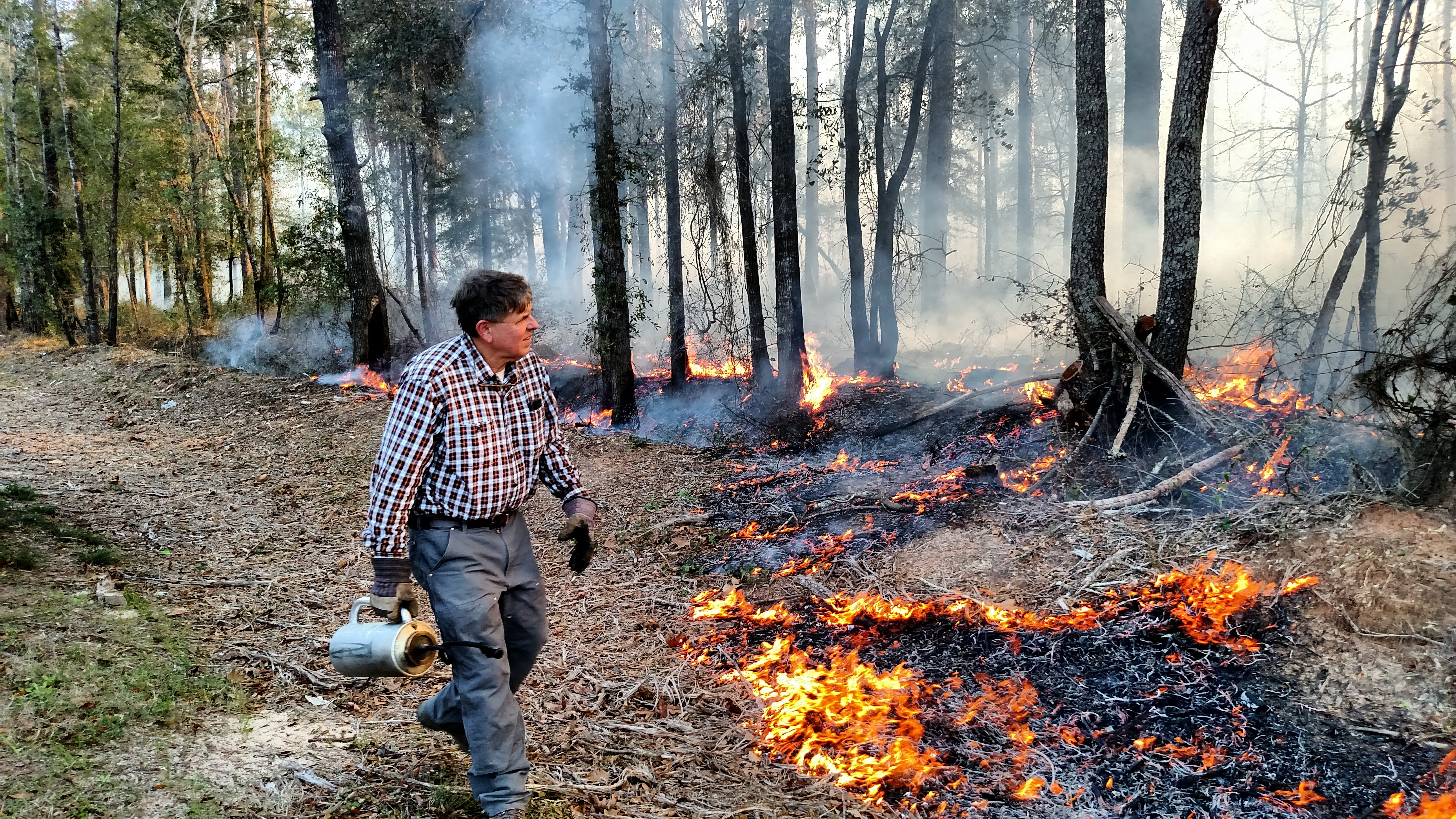 Longleaf pine forests depend on fire to stay healthy. Through prescribed fire, landowners introduce this natural process in forests.