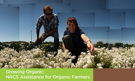 Organics Homepage feature Growing Organic