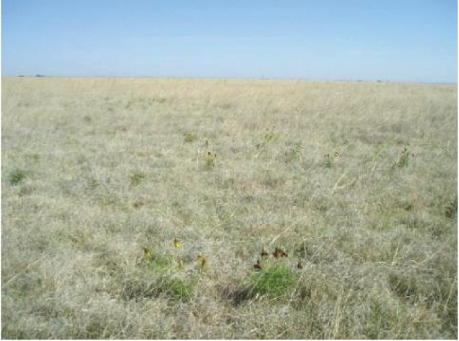 Figure A-7. Shortgrass/blue gramma dominant community of the Deep Hardland ecological site (R077CY022TX).