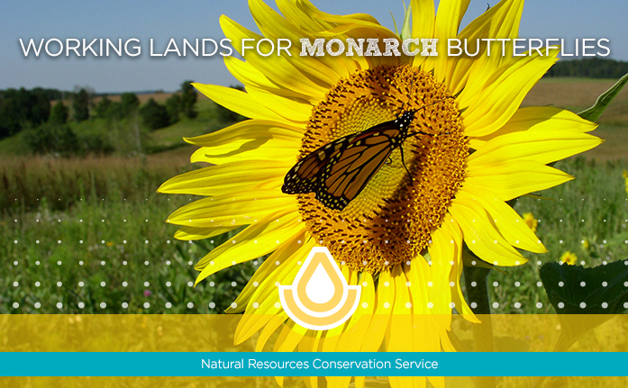 Working Lands for Monarch Butterflies NEW homepage