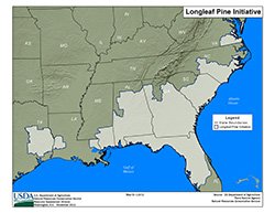 thumbnail of long leaf pine initiative map