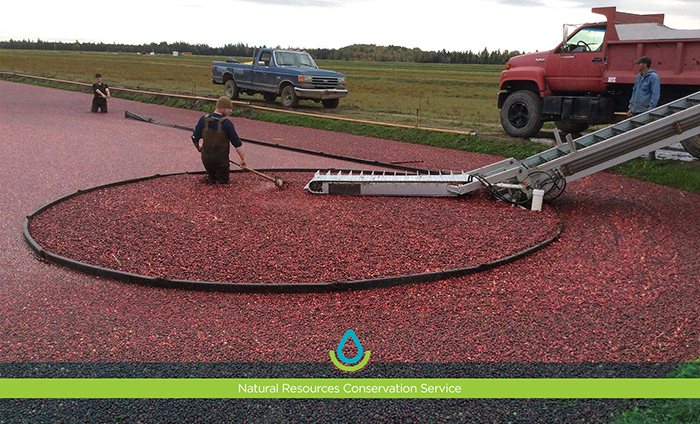 In Oneida County, Wisconsin, we visit James Lake Farms, an organic cranberry marsh owned and operated by John and Nora Stauner.
