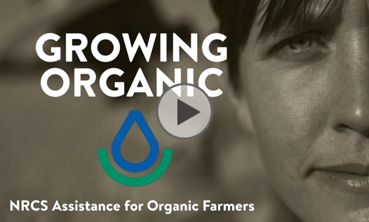 Image link to video on growing organic with USDA NRCS
