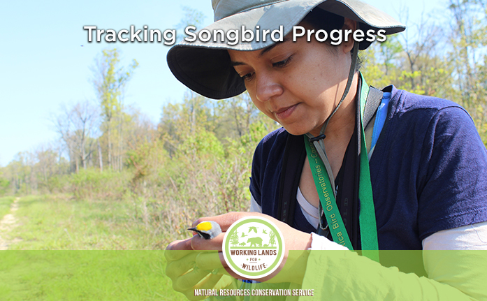 Link to Tracking Songbird Progress Feature Story 26ccbe0f23f2