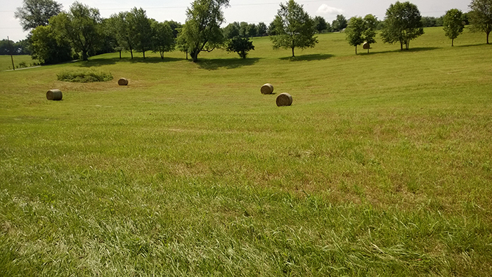 Four large bales of hay in dip in the land of a large field.