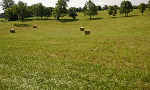 Four large bales of hay in a dip in a field
