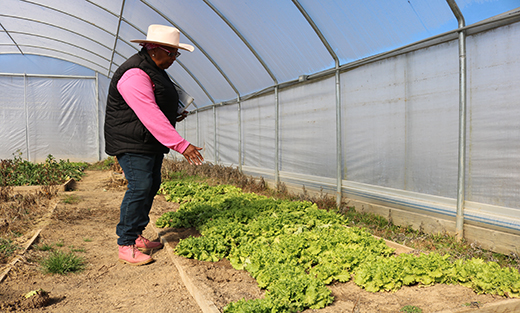 Ayers- Elliott was pleased with the results of the lettuce as it continued to grow during the winter weather.