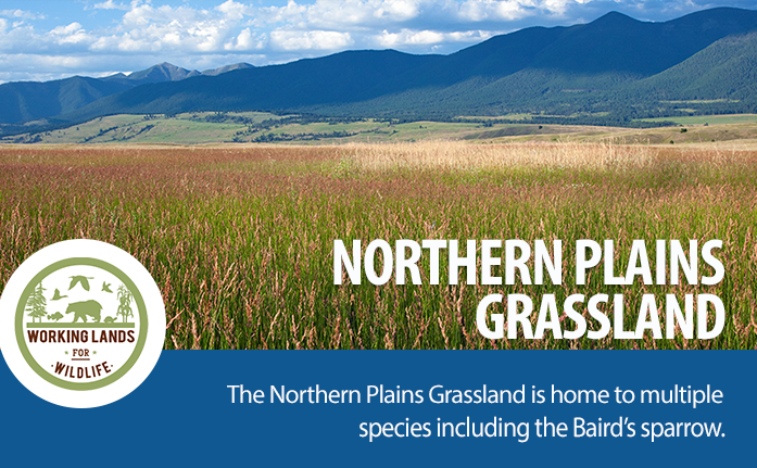 WebpageHeader-WLFW STATE PROJECTS_Northern Plains Grasslands
