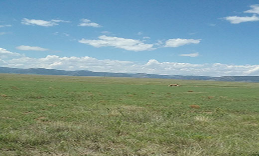 Photo of Grasslands protected from conversion to non-grasslands uses provide habitat for many wildlife species.