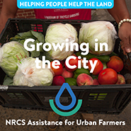 NRCS-GROWING_IN_THE_CITY_TILE