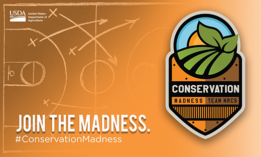 Conservation Madness