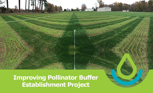 Banner image of Improving Pollinator Buffer feature banner, Panorama of pollinator establishment plots with cool season cover (wheat on left, oats on right) with a vertically rotated replica picture creating an illusion of a star pattern.