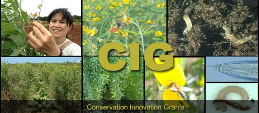 Conservation Innovation Grants – Pacific Islands Area  – One Month Left – Apply Now