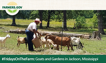 Goats and gardens in Jackson, MS