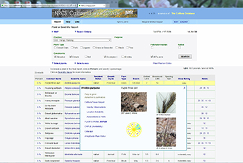 Click to enlarge this image of Search page for Range Planting for grasses and legumes in the Mojave desert with constraints set to Ecoregion 4 with soils, elevation and climate. Box selected for Purple three awn.