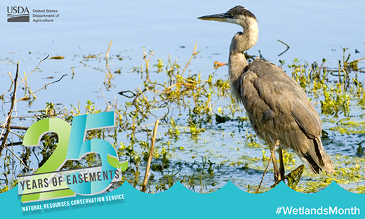 May is Wetlands Month.