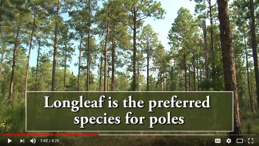 Longleaf Pine Restoration and Pole Production