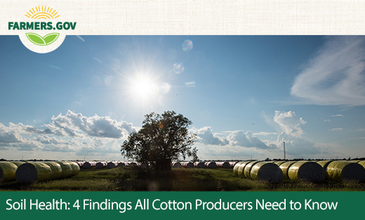 4 Findings All Cotton Producers Need to Know